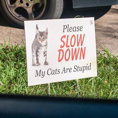 Driving home this morning I spot this sign cats slowdownhellip